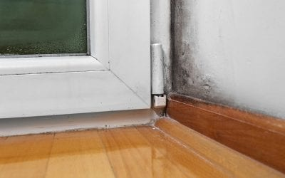 7 Ways to Prevent Mold Growth In Your Home