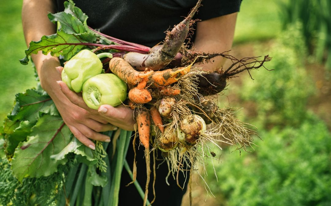 4 Simple Tips for Starting Your Fall Garden